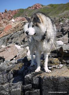wet hound