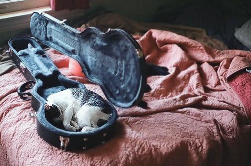 В футляре от скрипки