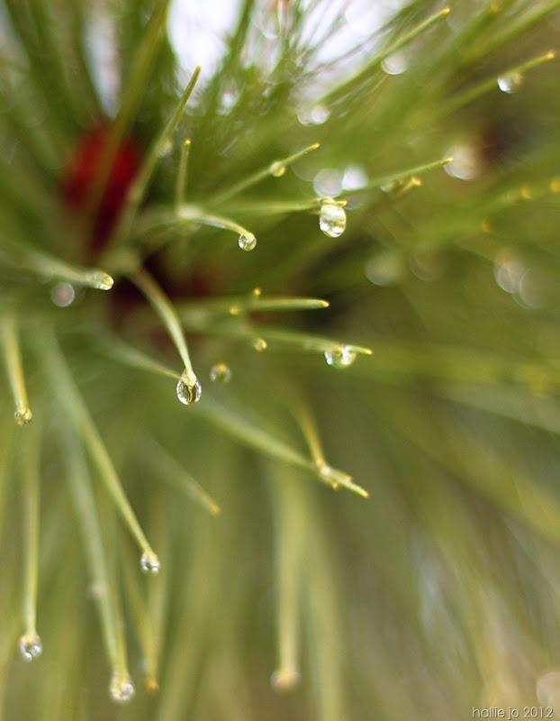 pine5