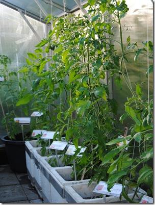 Botanisk hage og hagen i juni -12 020
