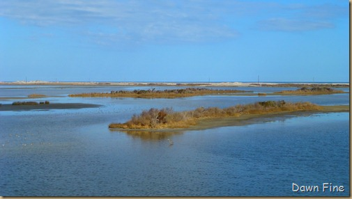 Pea Island NWR_068