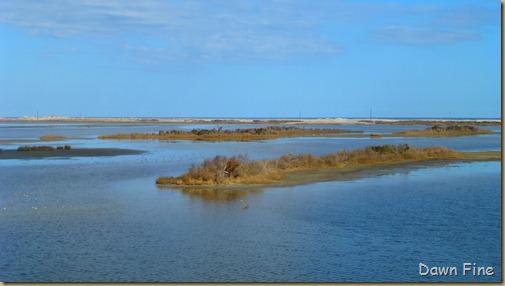 Pea Island NWR_068