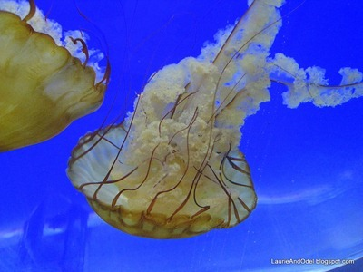 Brown jellies
