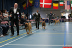 20130510-Bullmastiff-Worldcup-0525.jpg