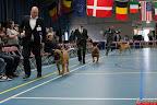20130510-Bullmastiff-Worldcup-0525.jpg