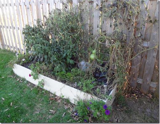 Garden Oct 19 (7)