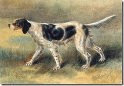 osthaus an english setter