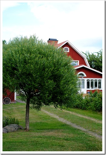 trädgården juli 2011 029