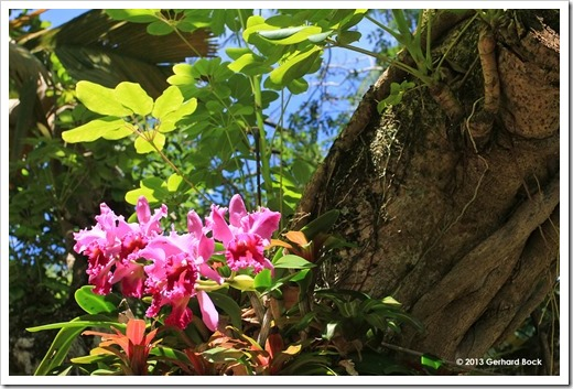 130713_TropicalGardensOfMaui_073