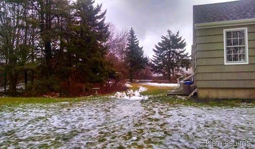 6. 12-11-14 backyard view