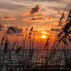 Sea Oats at Sunset by Paul Brady - Landscapes Waterscapes ( dunes, grass, sunset, florida, gulf, seagrass, sea oats, ocean, travel, beach, atlantic, captiva )