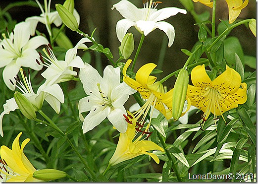 Lilies_Woodland2