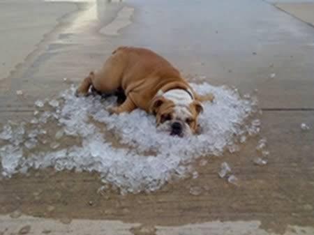 cachorro-no-gelo