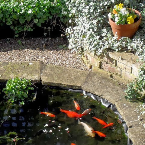 fish basking in the sunshine