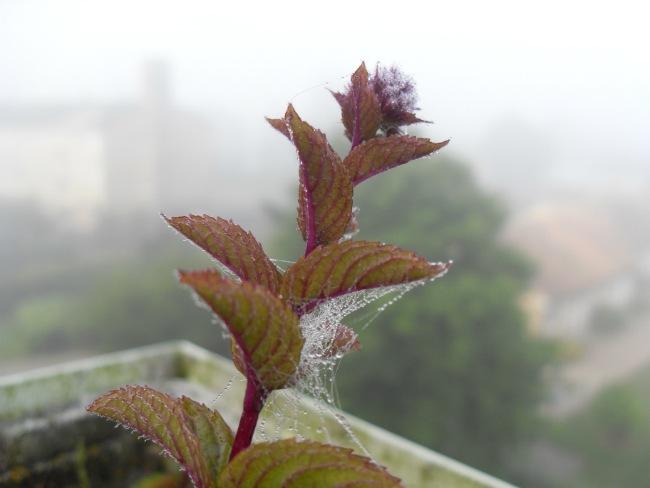 Morgentåge, august 2012