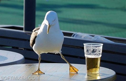 43-животные-приколы-алкоголь