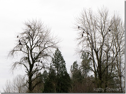Busy Eagle trees