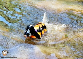 Pets Adventure 13 (159_1) (5)