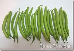 Provider bean 1st harvest