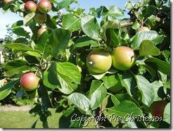 Ananas æbler