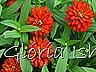 Glória Ishizaka -   Kyoto Botanical Garden 2012 - 82