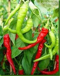 Pepper Lombardo