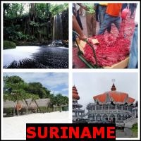 SURINAME- Whats The Word Answers