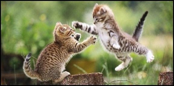 Fighting Kittens 4