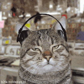 Cat listening to Lata Mangeshkar,Himesh Reshmia,BABA Ram Dev,Anup Jalota,Kumar Sanu and You ;)