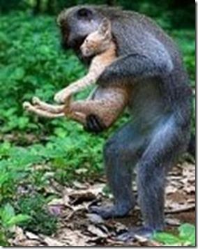 monyet_kucing