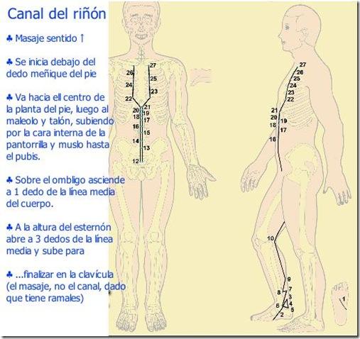 Canal del riñón - Gráifico explicado1