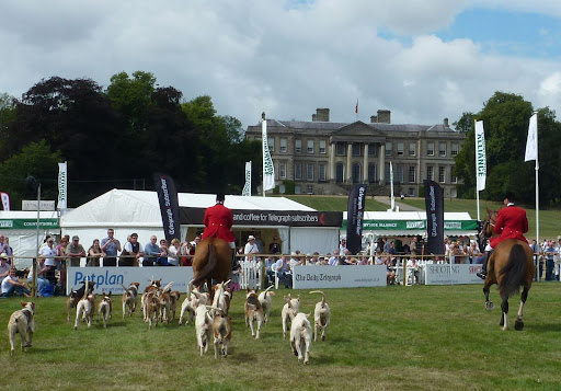 CLA Game Fair SHH Hound Parade at Ragley Hall 25.07 (80).jpg