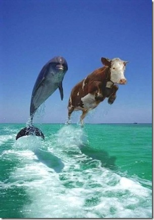 dolphincow