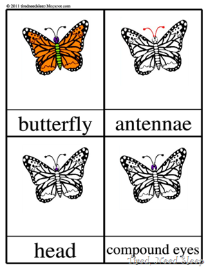 parts of a butterfly - Montessori 3-part cards