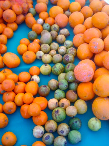 Tangerines, guavas, and blood oranges, oh my!