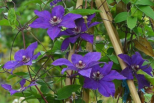Azul - Glória Ishizaka 21