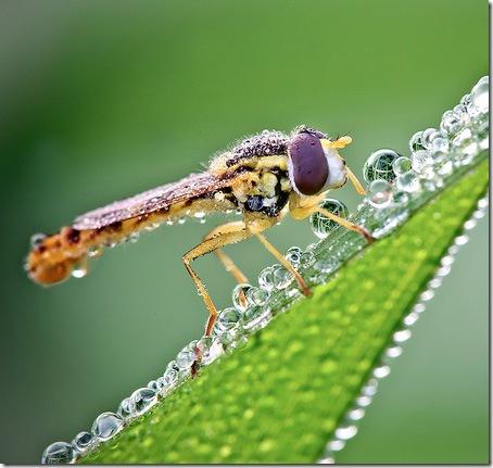 imagini insecte