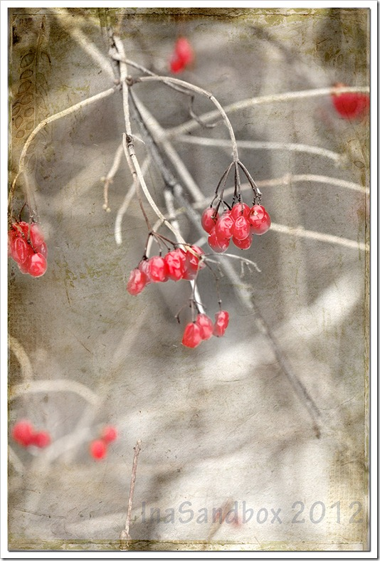 berries with naturesbeauty texture