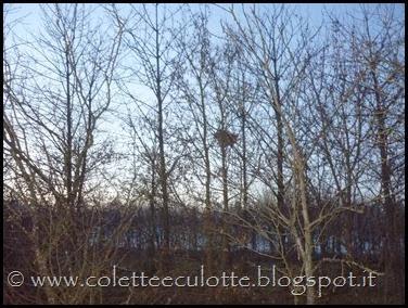 Passeggiata al Dosolo - 1 gennaio 2013 (71)