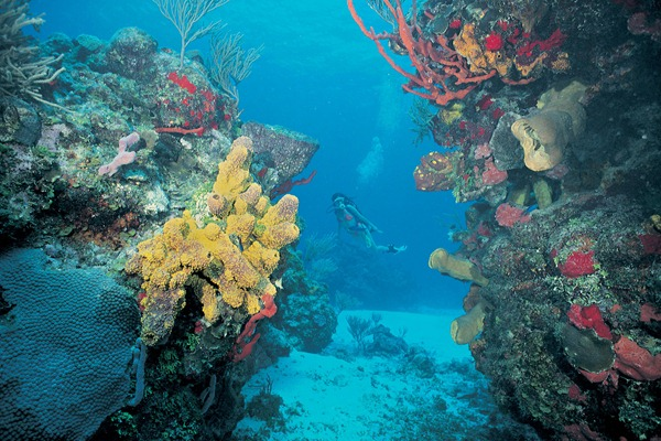 Mesoamerican Barrier Reef in Belize