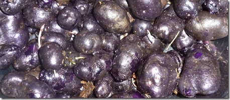 Purple congo potatoes