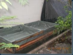 contoh kolam asuhan anak benih ikan keli