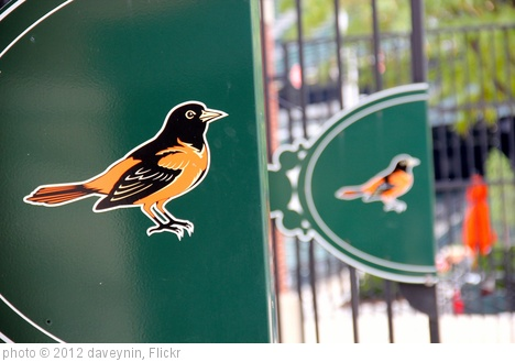 'Oriole bird logo of Baltimore Orioles' photo (c) 2012, daveynin - license: http://creativecommons.org/licenses/by/2.0/