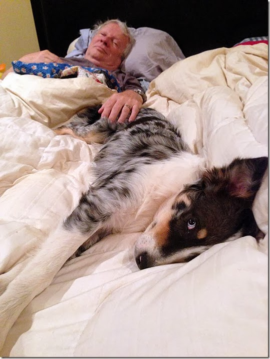 dora dad bed