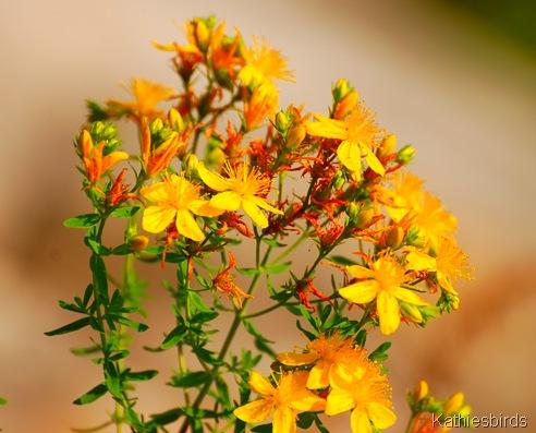 18. flowers 7-5-11-kab
