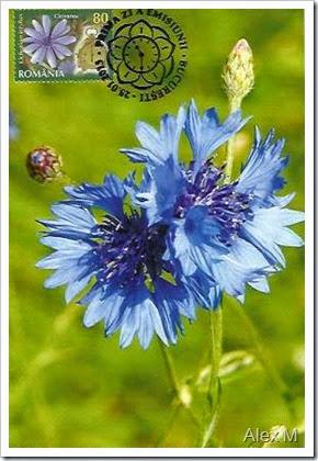 CICOAREA (Cichorium inthybus); Obl. SPZ, Bucureşti 25.01.2013 < COMMON CHICORY (Cichorium inthybus); Bucharest First Day stampmark 25.01.2013 >