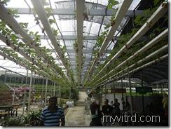 Green View Garden 2