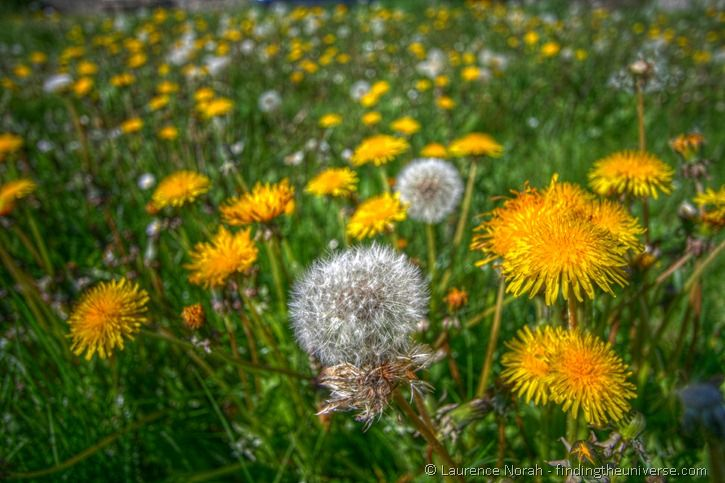 The future is bright and full of dandelions