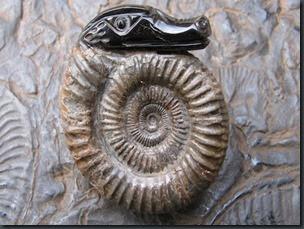 00290-snakes-head-on-ammonite