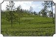 MNR_308_DSC0053_www.keralapix.com